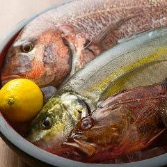 魚のすすめ
