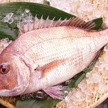 鰹をはじめ、鯛等新鮮な魚を漁港から直送!