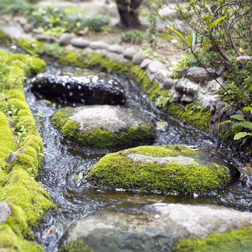 5月末~6月上旬頃は賀城園の庭園を流れる小川に蛍が舞います。