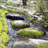 5月末~6月中旬頃は賀城園の庭園を流れる小川で蛍が舞います。