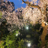 夜桜を眺めながらお食事をお愉しみいただけます。