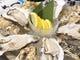 宮城直送のシェル牡蠣