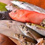 真鶴港や早川港等、小田原近海で獲れる新鮮な魚介類