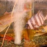 大きな水槽も配置し、仕入れた鮮魚が生きたまま管理されています