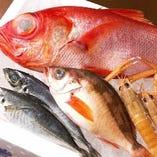 沼津漁港から直送された鮮魚たち【静岡県】