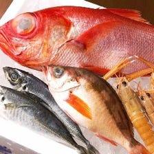 沼津直送の鮮魚