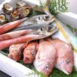 厳しく目利きした九州から直送される新鮮な季節の魚【鹿児島県】