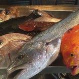 鮮魚・海産物【宮崎県】