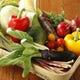 旬の食材のおいしさを活かしたお料理が多数