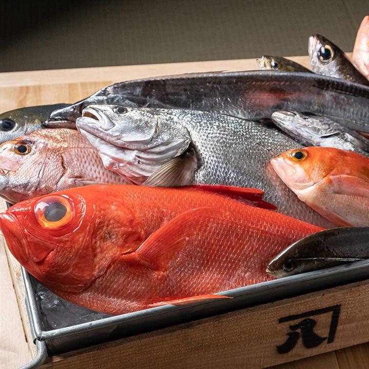 仲買人の目利きが光る沼津の新鮮魚介