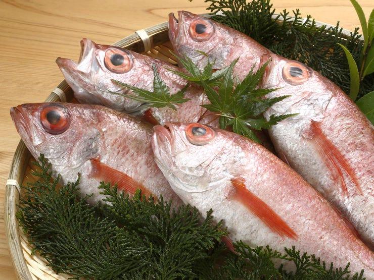 高級魚「のどぐろ」をリーズナブルに