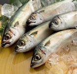 広島の市場から直送される瀬戸内の魚。その日に到着した魚に合わせてお出しする「本日のおすすめ」は数量限定、お早めに!