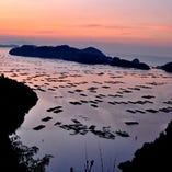 牡蠣漁/カキ筏の浮かぶ瀬戸内海の虫明湾は、朝日を浴びて黄金色に輝きます。