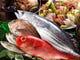 新鮮な海鮮料理をいつでもお楽しみ頂けます!