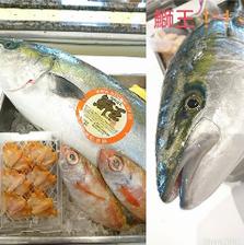 旬の鮮魚を毎日市場から直送