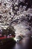 桜の名所、木屋町通り沿いに佇む