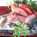 築地直送!旬の鮮魚