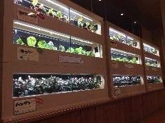 沖縄菜園ビュッフェ カラカラ あしびなー店