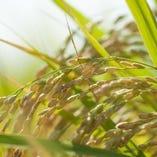 栃木県産の米【栃木県】