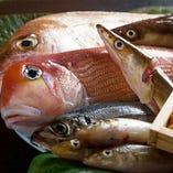 新鮮鮮魚【京都府】