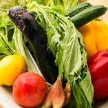 直送!みずみずしい季節の旬野菜【千葉県】