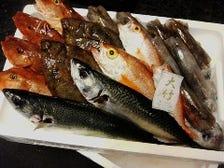 直送新鮮鮮魚!