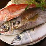 旬の鮮魚を九州から産地直送☆
