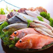 産地直送の旬魚をご賞味あれ