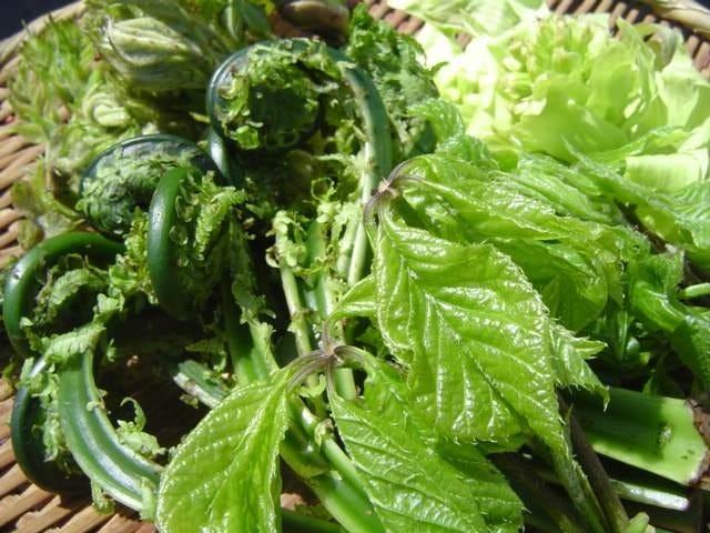 路地物の山菜は香りが格別!