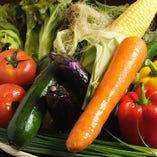 契約農家直送の新鮮野菜【千葉県丸長農場直送】