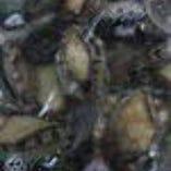 貝類刺身 貝焼