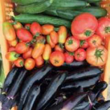 獲れたて新鮮『国産野菜』【四国】