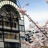 春には桜が満開。桜を見ながらのお食事は大人気です。
