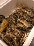 大ぶりでぷりっぷりの牡蠣
