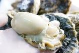 生産者から直接仕入れる幸多里産の牡蠣。その大きさも驚き。