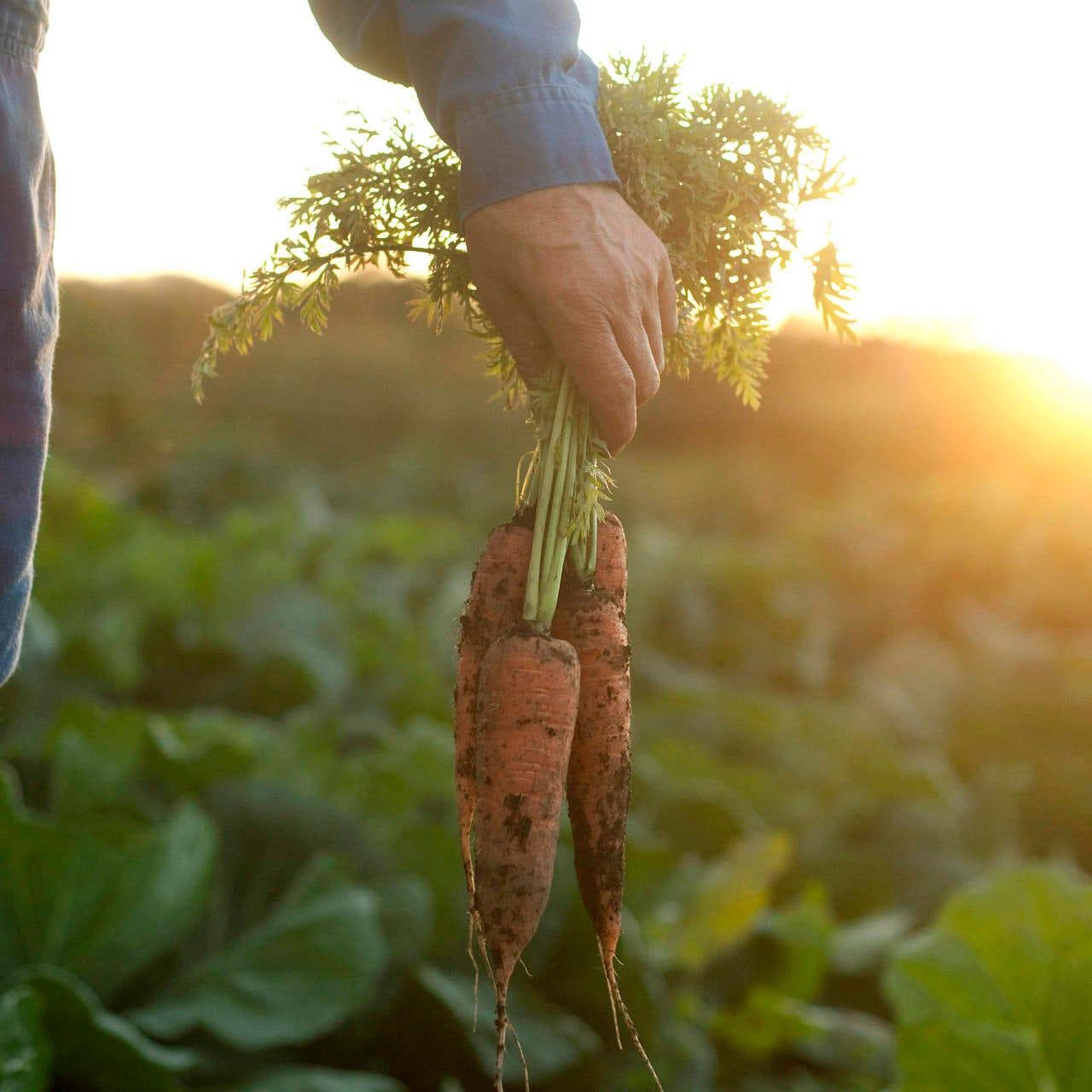 こだわりの自然栽培野菜を堪能