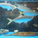 《生簀あり》 鮮度自慢の海鮮居酒屋!活きたまま入荷の魚介多数