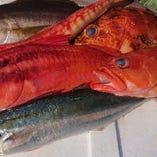 メニューは一例です。鎌倉・新島沖などの朝漁れの鮮度抜群の魚を中心に、旬のものを日替わりでご用意!
