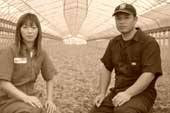 鉾田市中居農園水菜畑中居夫婦