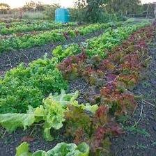 徳島の農園から直送 自然栽培の野菜