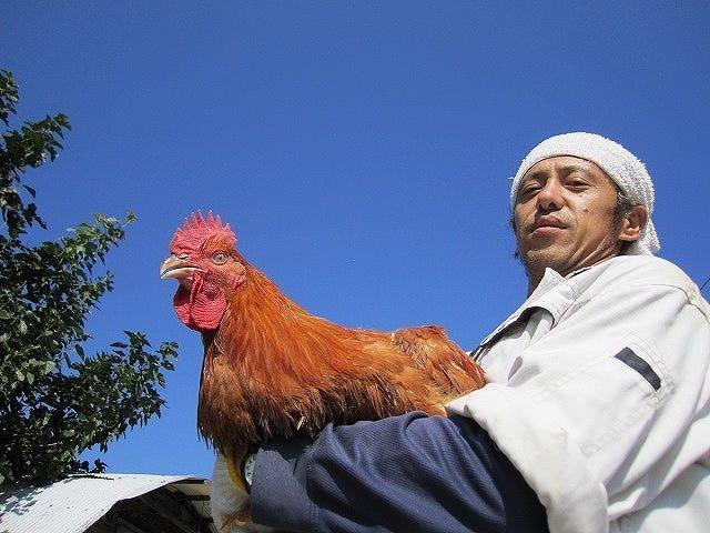 ◆【広島熟成どり】【広島赤鶏】使用