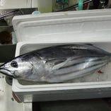 日本各地から仕入れる新鮮な鰹【高知県】