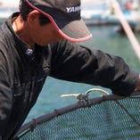 福岡糸島の漁師直送の天然活魚【福岡県糸島市】