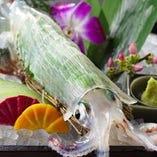活魚「ヤリイカや魚は全て捌きたての活きもの!」