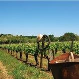 世界のワイナリーから届くとっておきの厳選ワイン