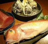 競り次第で変わる日替わりの鮮魚【大阪中央卸売市場】