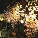 春のお花見いかがでしょうか?期間限定でお花見可能☆