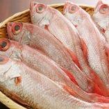 漁港直送の鮮魚を御造りはもちろん、焼き魚や煮魚に!!