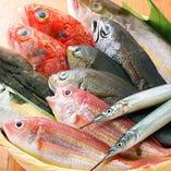 毎朝届く!漁港直送の新鮮魚介【東京都】