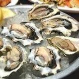 【絶品☆生牡蛎】 毎日仕入れる新鮮生牡蠣!8~10種ご用意。